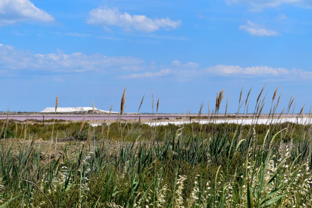 La montagne de sel des salins de Giraud entourée de végétation