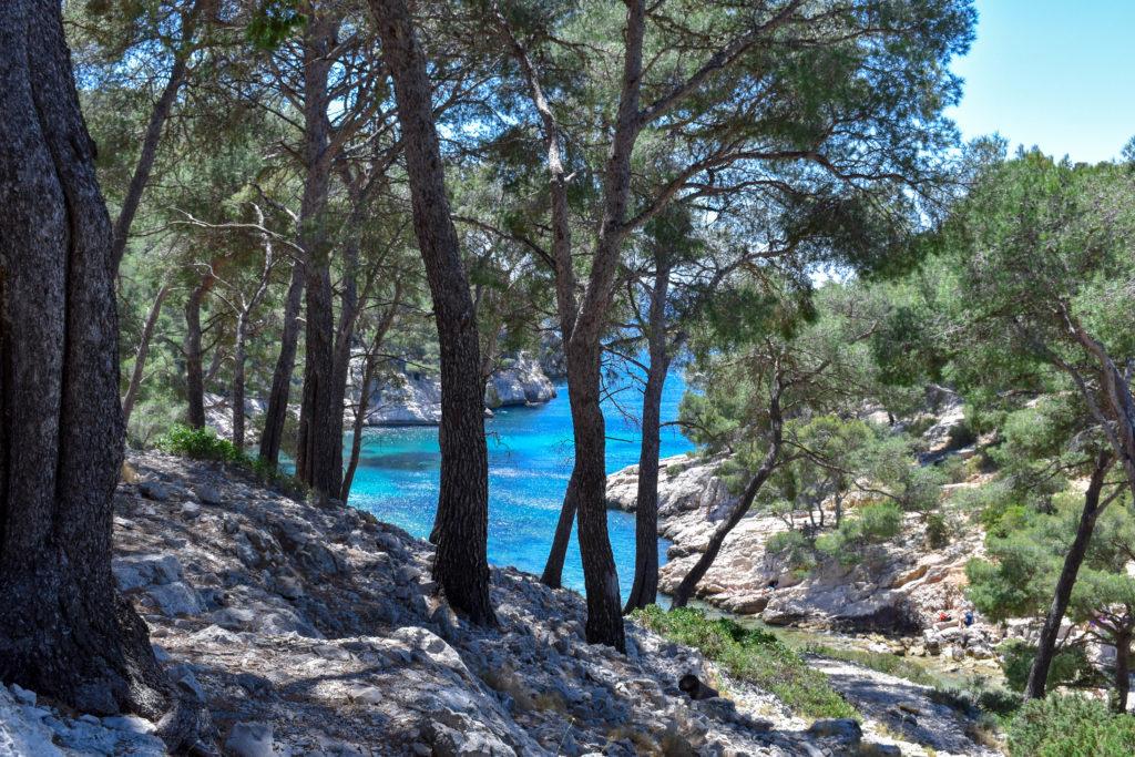 eau bleue turquoise des calanques entourée de pinède