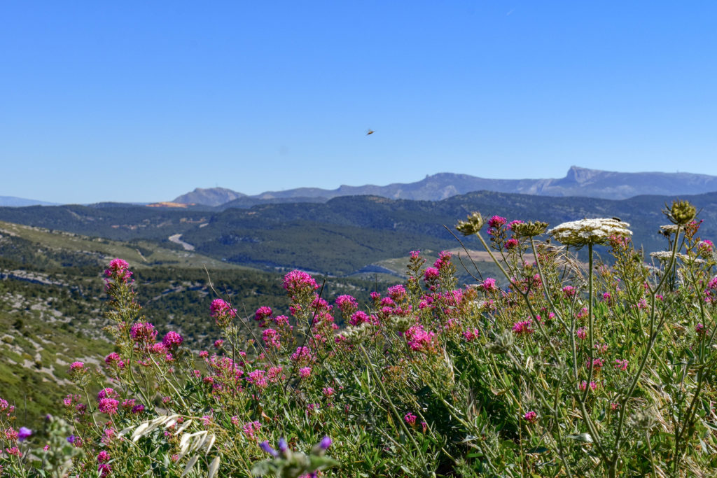 paysage de la route des crêtes avec des fleurs roses et blanches