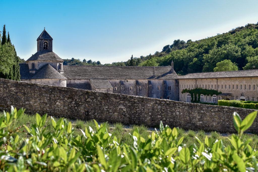 L'abbaye de Senanque dans son décor de pinède