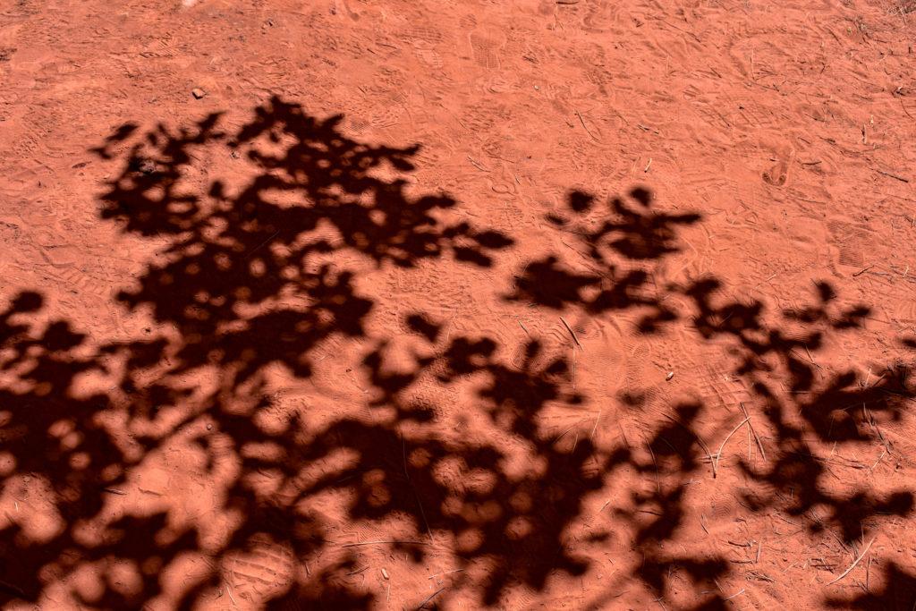 Ombre d'arbre sur un sol d'ocre
